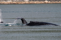 Whale Watching-20